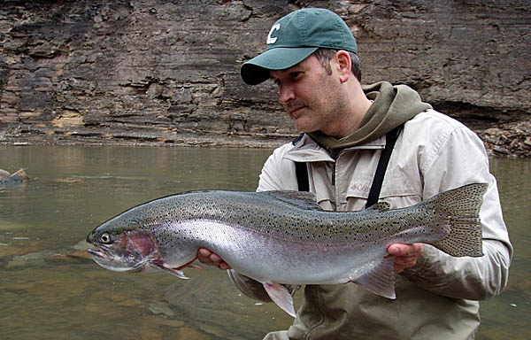 Big vermilion river steelhead ends the year for Ohio river fish