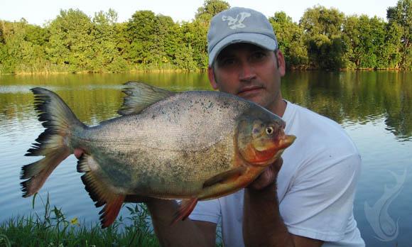 Ohio pacu for Where can i go fishing near me