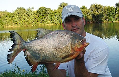 Ohio pacu ohio multi species fishing for Where can i go fishing near me