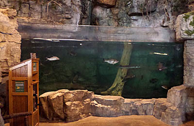 A trip to bass pro shops in rossford ohio for Bass fish tank