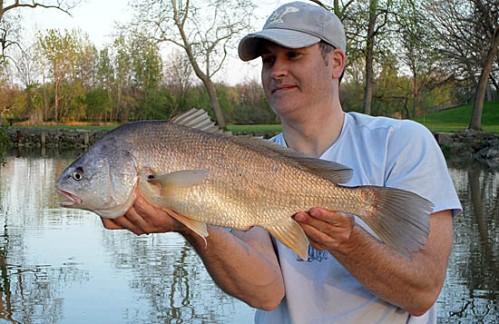 Sandusky river ohio multi species for Happy fish fremont