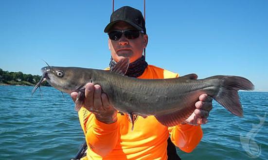 cwf09042016catfish