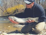 Late season Steelhead
